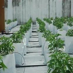 Organic Kitchen Gardening