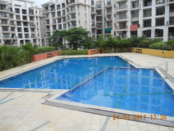 Crystal Mosaic Tiles Olympic Pool Construction Services From Associated Pools India