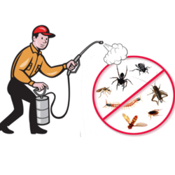 Ants Control Services