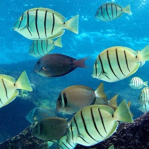 aquatic animals wholesale price mandi rate for aquatic species