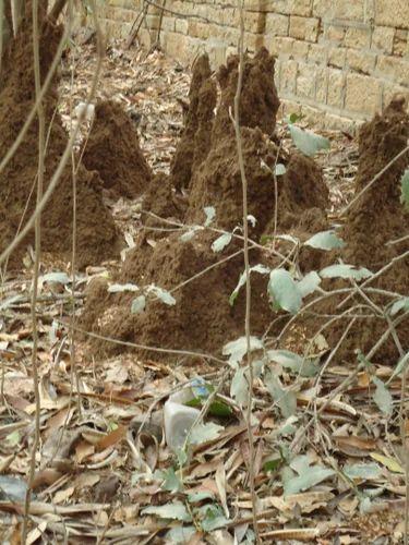 Anti Termite Soil Treatment