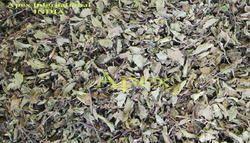 passiflora incarnata maypop
