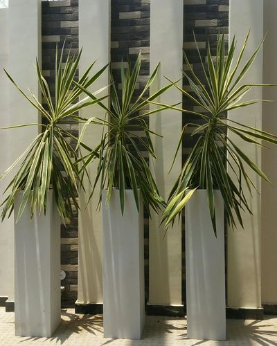 Planter -30/4 (48X12X12) inches