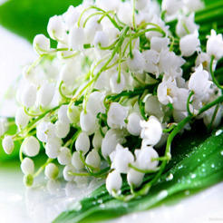 Lily Of The Valley Aroma Oil