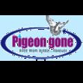 Pigeon Control India