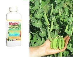 NPK Fertilizers 12-32-16