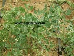 Vegetable Plant Supporting Net