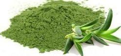 Aloe Vera Juice Powder