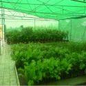 House Nursery Net