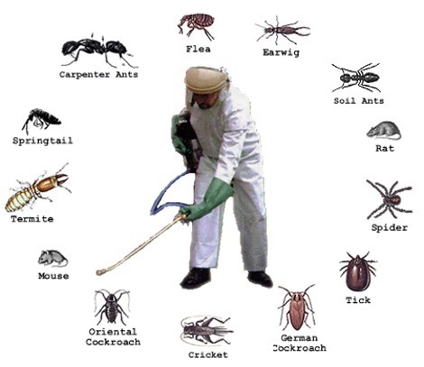 Benefits of pest control services