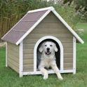 Dog Boarding /bog Hostel