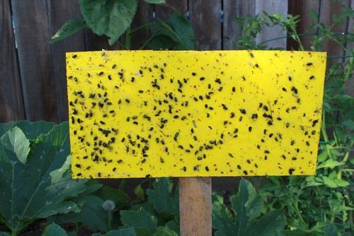 Insect Glue Trap Board View Specifications Details Of By Indo Gulf Pest Control Limited New Delhi Id 12810857812