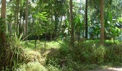 Residental Land