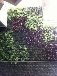 Hyperboles Best Vertical Gardening Services