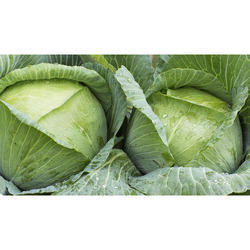 Fresh Green Cabbage, Pesticide Free (for Raw Products)