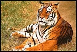 Wildlife Safari Tour Package