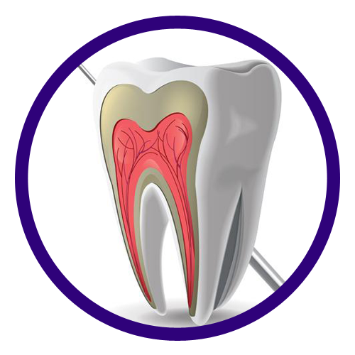 Saral Dental Software  - Silver Online Versions