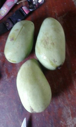Harvest Mango