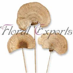 Sponge Mushroom On Stem