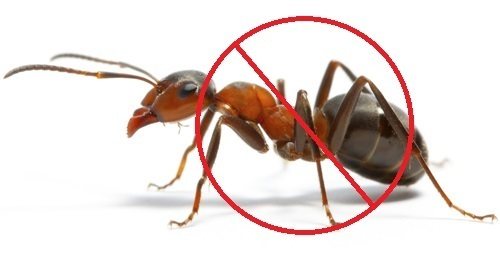 Ants Pest Control Services Ants Pest Control Service À¤š À¤Ÿ À¤• À¤Ÿ À¤° À¤² À¤¸à¤° À¤µ À¤¸ À¤† À¤Ÿ À¤• À¤Ÿ À¤° À¤² À¤¸à¤° À¤µ À¤¸ À¤š À¤Ÿ À¤¯ À¤• À¤¨ À¤¯ À¤¤ À¤°à¤£ À¤• À¤¸ À¤µ À¤ In J P Nagar Bengaluru Acuity Pest Control Id 13012465073