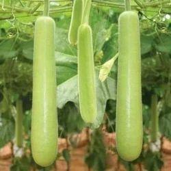 Bottlegourd Seeds