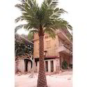 Artificial Palm Tree 15 feet