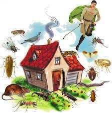 Herbal Pest Control Services