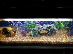 Fish Tank Cleaning And Maintenance