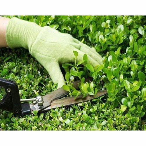 Garden Maintenance Service Landscape Garden Maintenance Service