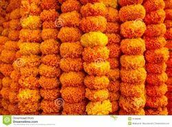 Marigold Garlands (LADI), 100 Ladi