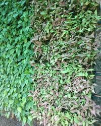 Planter Bio Wall