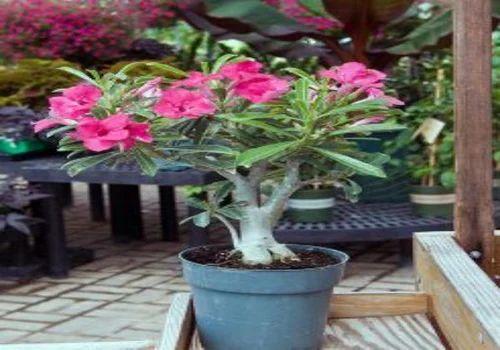 Plants Online Nursery Manufacturer Of