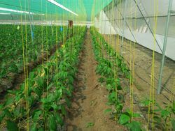 Greenhouse Twine Rope