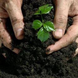 Organic Bio Fertilizers, Pack Type: Pp Bag