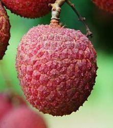 Litchi Testing Services