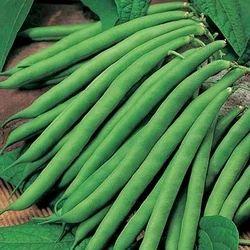 French Bean Anupama