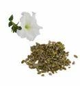 Pure Vanilla Flavored Seeds