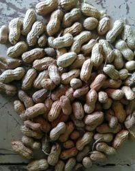 Groundnut in Tiruchirappalli - Latest Price & Mandi Rates