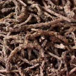 Picrorhiza Kurroa Extract
