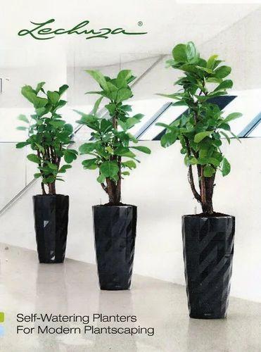 Decorative Planters Self Watering Lechuza Planter