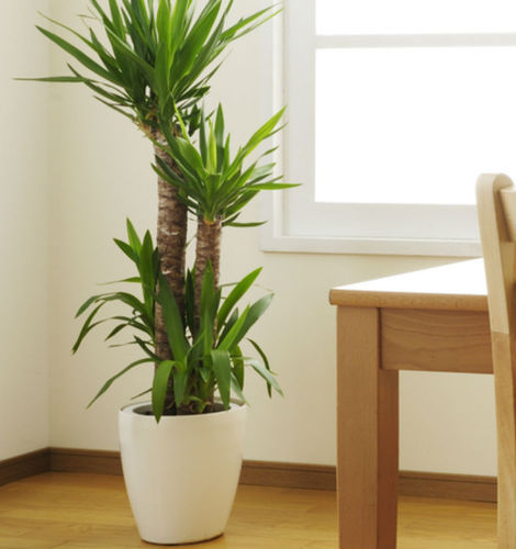best indoor plants, indoor plants designs