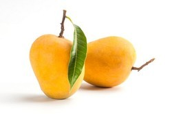 Mango Alphonso Flavour