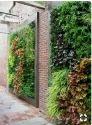 Hyperboles Best Vertical Gardening Services || Green Walls || Bio Walls