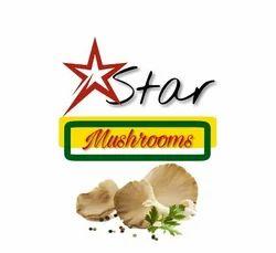 Star Dry Oyster Mushrooms