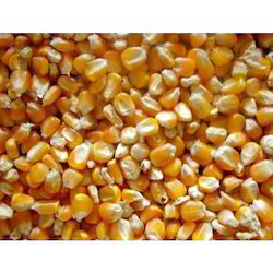 Yellow Maize For Animal Use