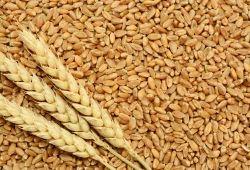 Nature Fresh Chakki Atta Wheat Flour, Pack Type: Bag