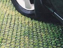 Grass Reinforcement Mesh, For Agricultural