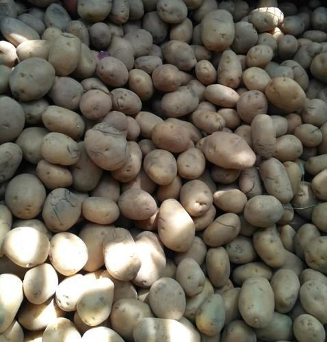 Brown Oval And Round Potato, Pack Size (Kilogram): 40 Kg And 30 Kg