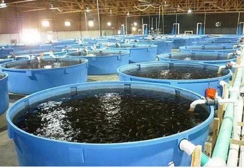 Fishery Business
