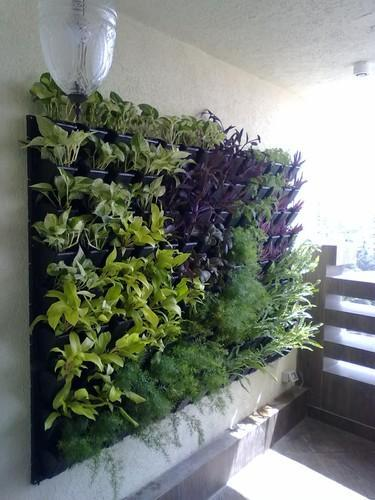 Vertical Garden Design Maintenance In Dadar West Mumbai Akshay